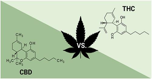Cannabis Oils: A Beginner's Guide